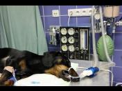 Veterinární ošetření v narkóze - anestezie pro psy a kočky