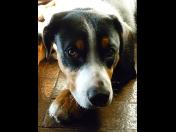 Kastrace psů a koček - prevence proti vzniku nádorů a cukrovky