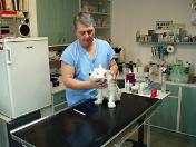 Akce při čipování psů, zvířat-ušetříte poplatek za psa