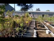 Zahradnictví s velkým výběrem květin, stromků i keřů