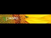 Semena slunečnice Praha západ - hybridy slunečnice, ranné i středně ranné