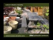 Zahradnictví, okrasné dřeviny, školka, solitérní keře, javory