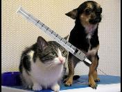Zajistěte si včas - Hromadné očkování psů proti vzteklině Česká Lípa