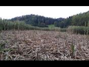Kvalitní travní senáž pro bioplynové stanice