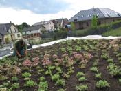 Návrh, založení a údržba zahrady i trávníku, výsadba rostlin, stromů a okrasných keřů