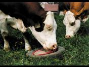 Minerální lizy pro zvěř, výroba a distribuce doplňkové výživy