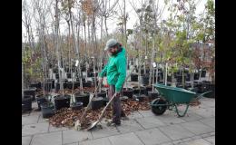 Volná místa - zahradník