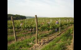 Vinohrady a výroba kvalitní moravské víno