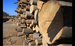 Velkoobchod, prodej dřeva Znojmo