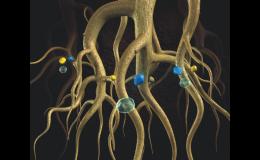 Přípravek Terracottem pro zlepšení růstu kořenů