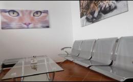 Čekárna pro kočky - přívětivé prostředí pro kočky