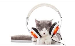 Čekárna a ordinace pro kočky - veterinář malých zvířat