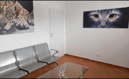 Veterina Opava - čekárna pro kočky
