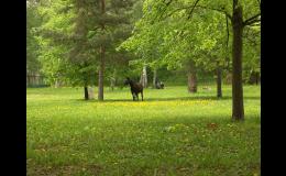 Dyjsko-svratecký úval s typickou polní krajinou