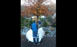 Listnaté, jehličnaté solitérní stromy - prodej