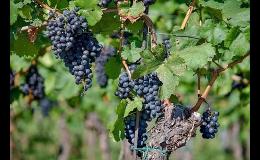 Vinařství Jan Plaček - objednejte si víno přes náš e-shop