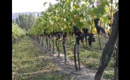 Zemědělská rostlinná výroba,vinařství Horní Věstonice