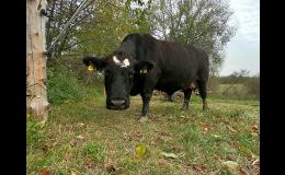 Prodej masa v BIO kvalitě Fulnek