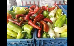 Čerstvá zelenina přímo z pole Brno