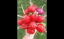 Zelenina z rodinné farmy Brno