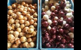 Papriky, rajčata, květák a brambory a další zelenina  - každodenní sklizeň Brno