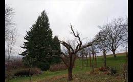 ořez ovocných stromů Zlínský kraj