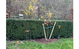 stříhání živých plotů Zlínský kraj