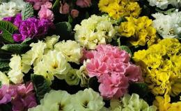 Široký sortiment sazenic a sadeb v prodejně Zelená zahrada Znojmo