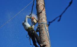 kácení nebezpečných stromů - VERTIK Vizovice