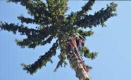 kácení nestabilních stromů - VERTIK Vizovice