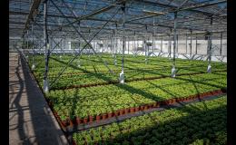 Zelenina ve skleníků