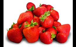 Prodej výborných jahod z Prahy, samosběr a pěstování