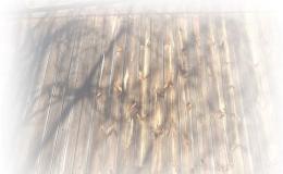 Likvidace a odvoz stavebního dřeva