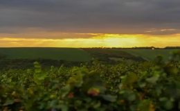 Teambuilding ve vinici s ubytováním jižní Morava