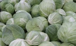prodej zelí na krouhání - zahradnictví Tlumačov