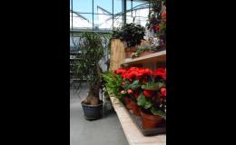 balkónové, pokojové rostliny Brno