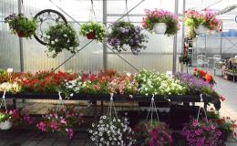 Profesionální zahradnictví Brno