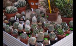 balkonové rostliny Brno