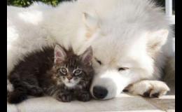 Prevence koček Opava - odblešení, odčervení a očkování