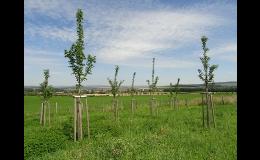 Výsadby krajinné zeleně