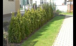 Prodej živých listnatých i jehličnatých plotů, zahradnictví, okrasné dřeviny, keře Pardubice