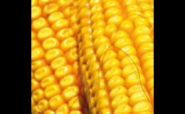 Zemědělské komodity Praha západ - řepka pro pěstitele, kukuřice pro krmné účely