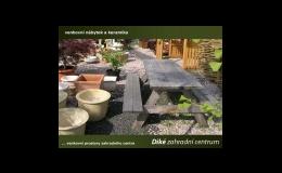 Zahradnictví, okrasné dřeviny, školka, solitérní keře, javory, Příšovice