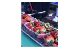 Drátěné dopravní pásy pro potravinářský průmysl