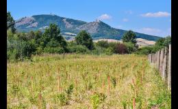 Realizační projekty krajinné zeleně