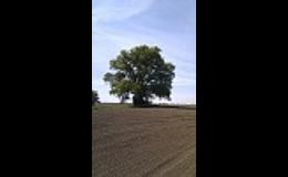 Památná lípa, Boží muka na okraji obce Pašinka v okrese Kolín