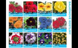Balkónové rostliny prodej