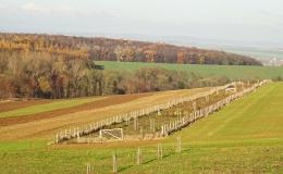 výsadba krajinné zeleně