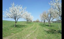 Obnova krajinných prvků a struktur