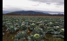 Výroba krouhané a kysané zelí Frýdek-Místek
